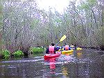 4/27/2008:  Kayakers participate in the DLITE Delmarva Birding Weekend paddle on Prime Hook Creek in the Prime Hook National Wildlife Refuge.