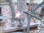 A rare Squirrel Horse as seen in the backyard of Jack & Andrea Barnes.