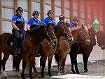 The Ocean City mounted police. The horses are kept at Bay Point Equestrian Center adjacent to Ocean Pines.